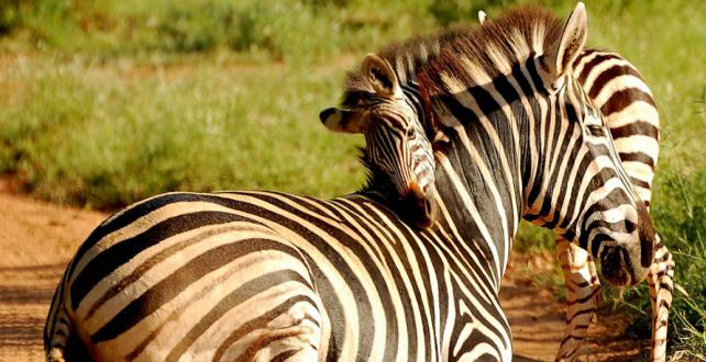 Safari Trip Ideas: privately Guided Safari through Tanzanias North & Zanzibar ..