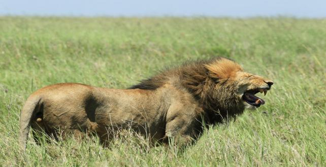 Safari Special: Sanctuary Special Offer for 2015: The Tanzania Experience ..