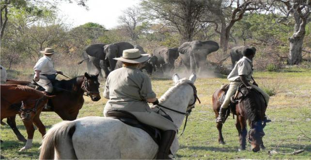 Safari Special: Free nights at horse riding camp in the Okavango Delta! ..