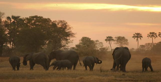 Safari Special: 7 Nights / 8 Days Fly-In Budget Safari: Okavango Delta, Chobe River and Victoria Falls..