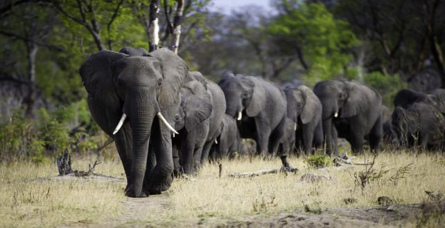 Safari Trip Ideas: 9 Day Affordable Hwange Nationalpark Safari & Victoria Falls..