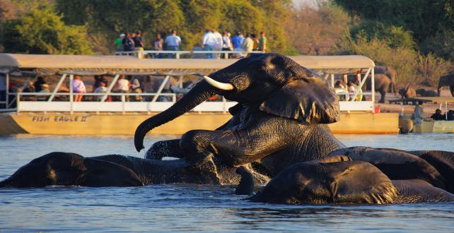 Safari Trip Ideas: 7 Day Affordable Botswana & Victoria Falls  ..